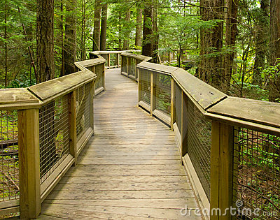 Wooden forest walkway