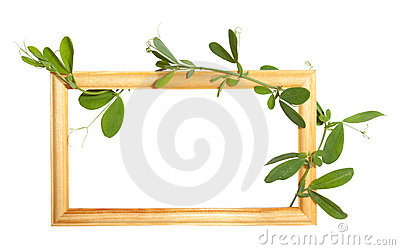 Wooden frame with bindweed