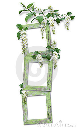 wooden frame with branches of bird cherry