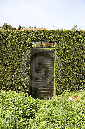 Wooden gate in hedge
