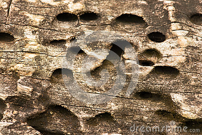 Wooden Hole