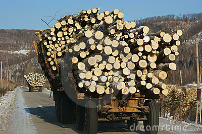 Wooden Logs on Logging Truck Trailer
