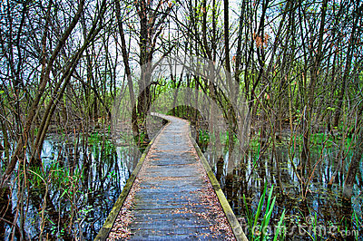 Wooden overpass through trees