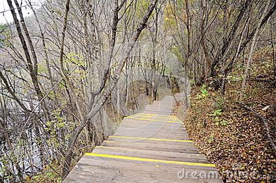 Wooden path in autumn forest