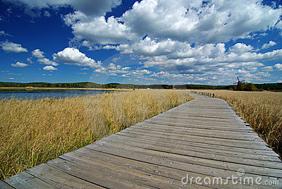 Wooden path through lake and reeds