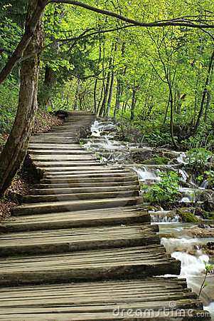 Free Wooden Pathway In Spring Forest Near Stream Stock Photo - 6722600