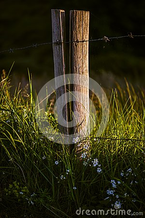 Wooden pole with barbwire