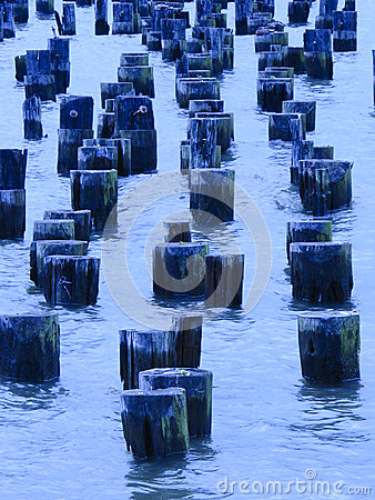 Wooden posts in the Hudson River