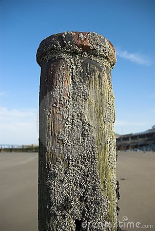 Free Wooden Sea Groyne Stock Photo - 22751640