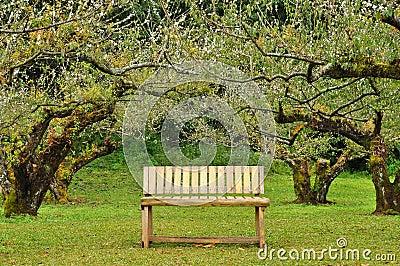 Wooden seat in garden