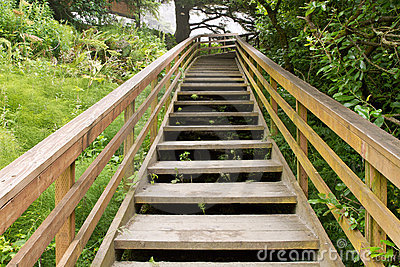 Wooden Stairs at Hiking Trail