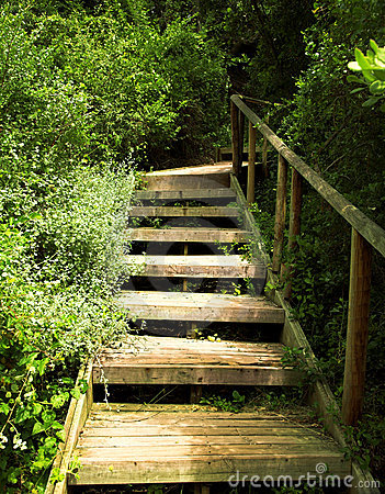 Free Wooden Stairs In Green Bushes Stock Image - 3018231
