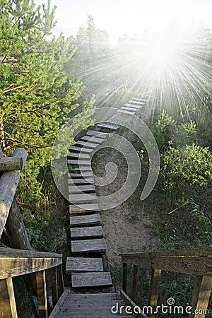 Wooden stairway to heaven