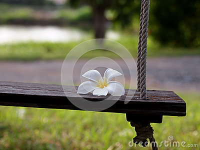 Wooden swing with white Plumeria