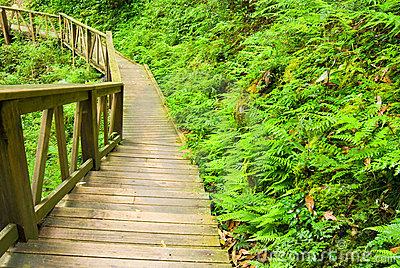 Wooden walkway into the forest