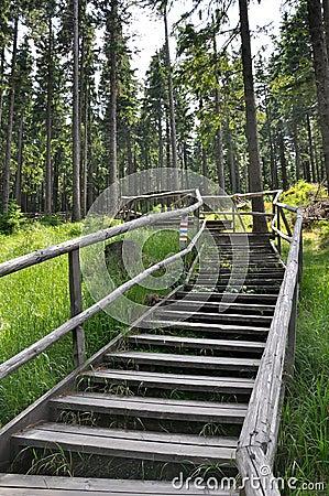 Wooden walkway to Boubin top