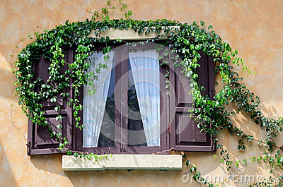 Wooden window with ivy