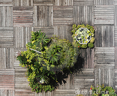 Woodern Decking and Flowers