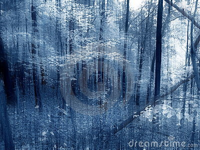 Woodland Illusion