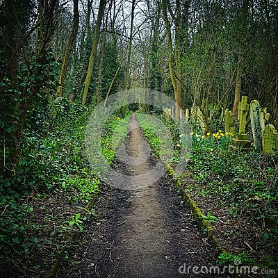 Free Woodland Path Stock Photo - 98190790