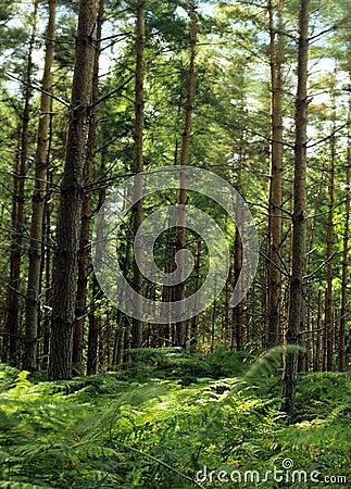 Woodland Scenic