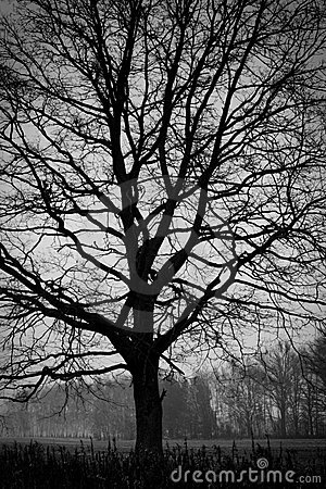 Woodland - tree. B&W photography