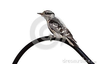 Woodpecker Curve