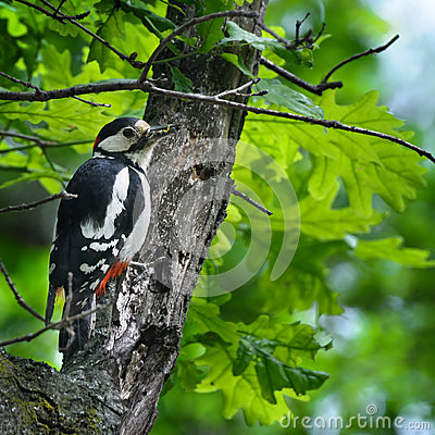 Woodpecker with insect in its beak