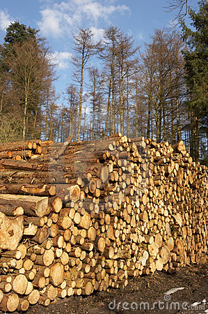 Free Woodpile Stock Photography - 1652952