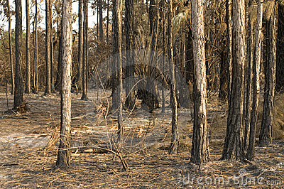 Woods Destroyed by Fire