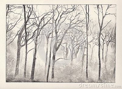 Woods etching