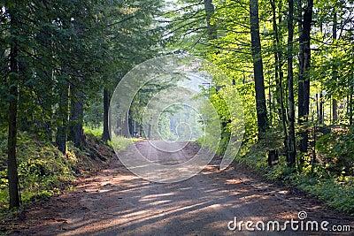Woods near Lake George
