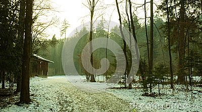 Woods path in winter.