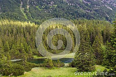 Woods at Tatra National Park