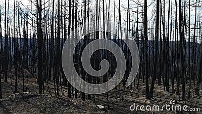 Woods vol kale bomen stock footage