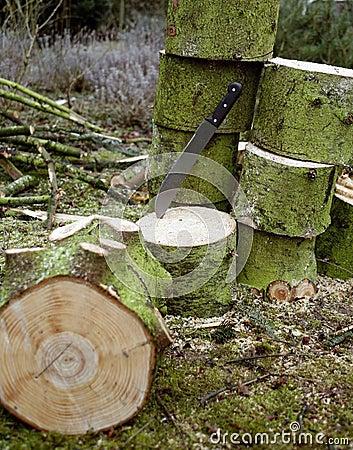 Woodworking scenery