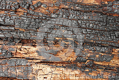 Woody background