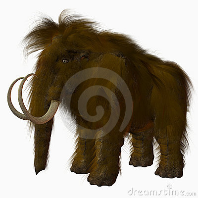 Free Woolly Mammoth Stock Photos - 2181243