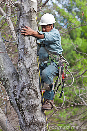 Worker with Chainsaw Climbing a Tree