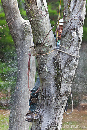 Worker with Chainsaw Cutting a Tree