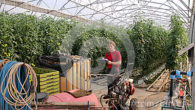 Worker in Commercial Greenhouse