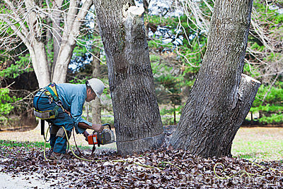 Worker Cutting a Tree with Chainsaw