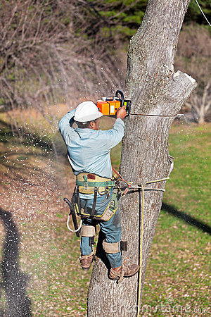 Worker Cutting Tree with Chainsaw