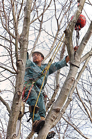 Worker in a Tree with Chainsaw