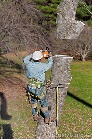Free Worker With Chainsaw Cutting A Tree Stock Photo - 23636370
