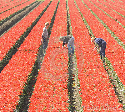 Workers in the field