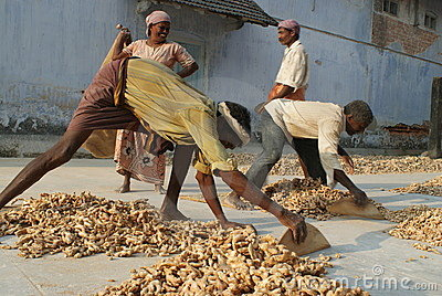 Workers at the Spice Market in Cochin, Kerala, Ind