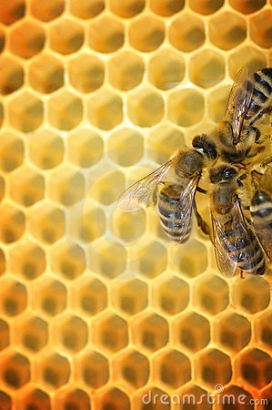 Free Working Bees Stock Photos - 9665493