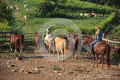 Working Cowgirl on Horse Farm Editorial Stock Image