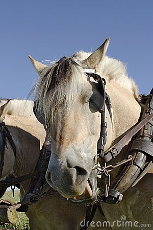 Free Working Horse Royalty Free Stock Photos - 1213418